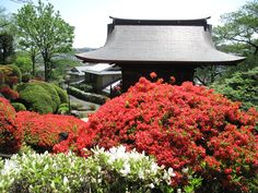 Togakuin aka tsutsuji temple