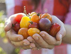 LOOKING for: panera bread fuji apple dressing - Recipe Exchange Forum - GardenWeb