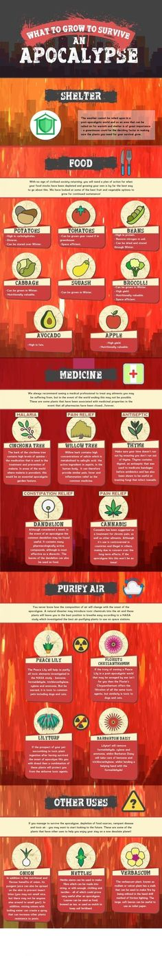 What to grow to survive an apocalypse [infographic] Survival Prep Shop Survival Life, Homestead Survival, Survival Food, Wilderness Survival, Camping Survival, Outdoor Survival, Survival Prepping, Emergency Preparedness, Survival Skills