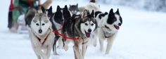 Experience Jackson in Winter with a Sleigh Ride at Spring Creek Ranch. Everyone has to try at least once!!