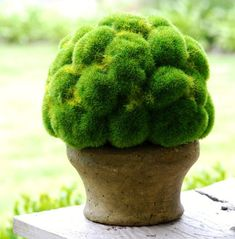 Moss ball centerpiece