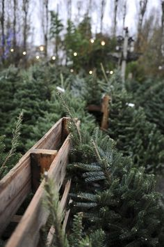 Picking out a Christmas tree! #myhappychristmas @White Stuff UK