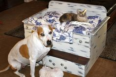 Cute DIY dog/cat bed