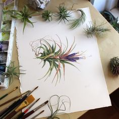 """Watercolor illustration of Tillandsia ionantha, posing with lots of little air plants."""