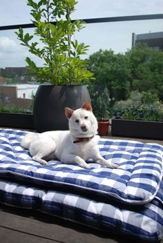 Dogs love Hastens beds too!