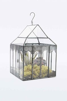 Urban Grow Winter Greenhouse Terrarium