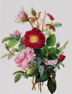 Still Life of Roses by Georgius Johanne Van Os.