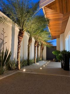 Palm Trees Landscaping, Florida Landscaping, Tropical Landscaping, Backyard Landscaping, Front Garden Landscape, Landscape Design, Fence Design, Garden Design, Compound Wall Design