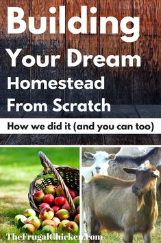 This is the story of how we started our homestead from scratch - and how you can too. Advice you can use TODAY. The more information you have from those who have done homesteading the better you will be prepared. Homestead Farm, Homestead Living, Farms Living, Homestead Survival, Survival Skills, Survival Tips, Homestead Layout, Survival Quotes, Future Farms