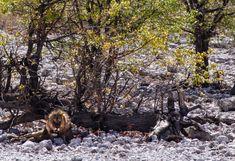 Etosha Park Namibia Hiking Boots, Africa, Park, Adventure Trips, Travel, Parks