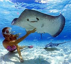 scuba diving with rays in tahiti