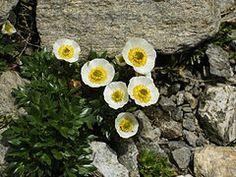 Monte Bianco - Wikipedia