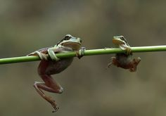 """Schooling """"Yes, you can do it son."""" - Savas Sener 500px"""