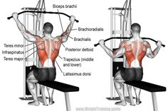 if you are searching for How To Do Wide Grip Lat Pulldown Properly then we must say you are in the right place. Learn How To Do Wide Grip Lat Pulldown Properly Good Back Workouts, Back Exercises, Fun Workouts, Stomach Exercises, Fitness Workouts, Fitness Gym, Lat Pulldown Machine, Bicep Muscle, Workout Routines