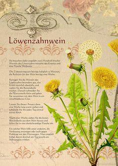Ein Löwenzahnwein - Another! Healing Herbs, Medicinal Plants, Natural Healing, Plant Illustration, Botanical Illustration, Taraxacum Officinale, Garden Plants, Herb Garden, Edible Garden