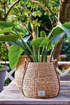 Plantas Indoor, Fiddle Leaf Fig Tree, Decoration Plante, Plant Basket, House Plants Decor, Interior Plants, Container Gardening, Plant Containers, Houseplants