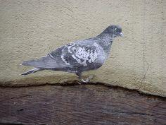 pigeon Trompe-l'oeil by Lapichon, via Flickr