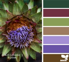 It's amazing what colour schemes nature can come up with!