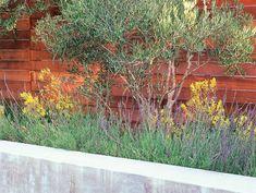 Arid Plants, Olive Tree, Kangaroo Paw Bernard Trianor + Associates Monterey, CA Brick Fence, Concrete Fence, Front Yard Fence, Wooden Fence, Pallet Fence, Cedar Fence, Fence Gate, Black Garden Fence, Green Fence