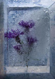 Lavender in soap