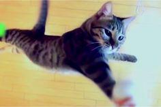 Nenhum Gato salta tão alto…
