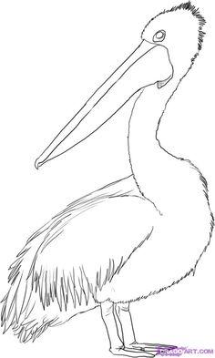 birds of australia - Google Search