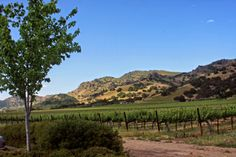 Helena, CA The Napa Valley, only 30 miles long, lies in the embrace of the Mayacamas Mountains to the west, and the Vaca Mountains. The Embrace, Napa Valley, Wine Country, Vineyard, Sailing, Paradise, Mountains, Blog, Travel