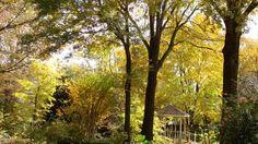 What I see from my backyard in the Fall. Gazebo is my neighbor's. Garden Photos, Gazebo, Backyard, Fall, Plants, Autumn, Kiosk, Patio, Planters