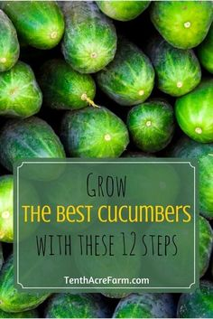 Cucumbers can be a tricky crop to grow for many gardeners. This guide will review the growing needs of cucumbers and some strategies for minimizing pest and disease so you can grow your best cucumbers.