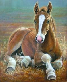 I like the picture because it's a baby horse in the grass. I like horses. Horse Drawings, Animal Drawings, Pretty Horses, Beautiful Horses, Horse Sketch, Horse Artwork, Baby Horses, Animal Coloring Pages, Equine Art
