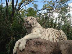 Africam Safari v Puebla, Puebla