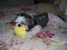 My Andy with his Thundershirt