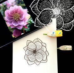 Day 15 #30ideas30days #illustration #flowers #blackandwhite #drawing #patternly.design #30ideias30dias #ilustração #flores #pretoebranco #desenhoobservacao #decolalab2016 #oficinaamandamol