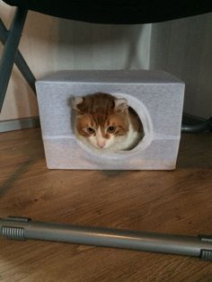 Cat in a box :)