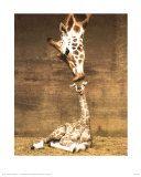 Masai Giraffe with its Calf, Masai Mara National Reserve, Kenya Photographic Print at Art.com
