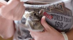 Excited Baby Bunny Enjoys His Milk