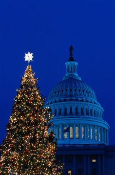 US Capitol and Christmas tree at night