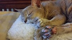 Abyssinian beans...