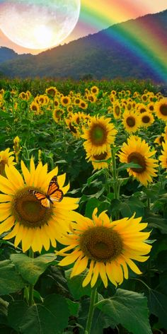 Good Morning Beautiful Pictures, Beautiful Nature Pictures, Beautiful Nature Scenes, Amazing Nature, Sunflower Iphone Wallpaper, Flowery Wallpaper, Nature Wallpaper, Beautiful Landscape Wallpaper, Beautiful Flowers Wallpapers