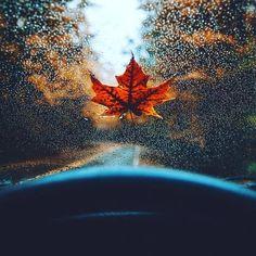 grafika autumn, leaves, and fall Fall Pictures, Fall Photos, Fall Pics, Beach Pictures, Photo Deco, Autumn Aesthetic, Saint John, Autumn Photography, Jolie Photo