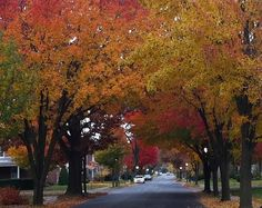 Pictures of Fall Color in Frederick