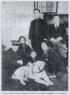 Japanese Akita, Japanese Dogs, Akita Dog, Hachiko Dog, Hachi A Dogs Tale, A Dog's Tale, Loyal Dogs, National Symbols, Dog Stories