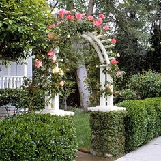 Mix Materials - Add a sense of surprise with an arbor. Here, a crisp white arbor rises out of a boxwood hedge and is crowned dramatically with climbing roses. Incorporate an arbor into a hedge, or use a mix of materials, such as wood, metal, or stone to create your arbor.