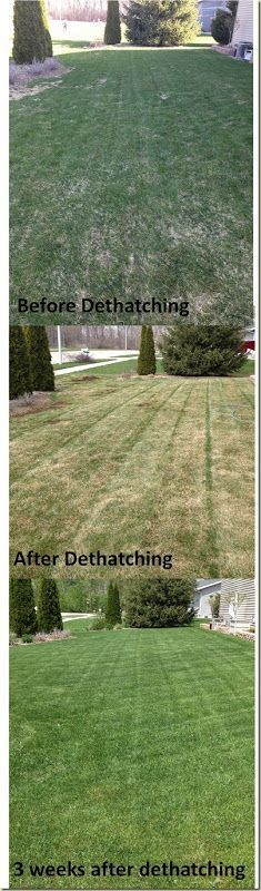 De-thatching---I have never heard of this before...might need to do this to perk up the yard.