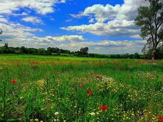 Almádi Ildikó Tavaszi mező A kép Pusztavám határában készült. Több kép Ildikótól: www.facebook.com/ildiko.almadi Vineyard, Marvel, Mountains, Facebook, Country, Nature, Outdoor, Outdoors, Naturaleza