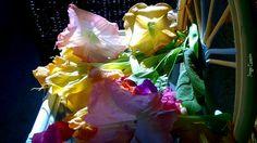 Flores de Noviembre - Flores, datura.