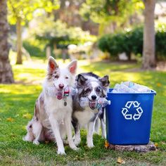 """Recycle? Sure, It's the least we can do 🌍"" writes @crazyaboutspots #dogsofinstagram #dog #happyearthday #photooftheday #instagood #tagforlikes"