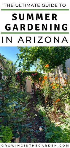 The challenge with gardening in Arizona comes when temperatures soar in the hot, dry months of the summer. It is possible to have a productive garden in the summer heat. Here are the essentials to know for summer gardening in Arizona. Backyard Arizona, Arizona Gardening, Desert Gardening, Desert Plants, Organic Gardening, Gardening For Beginners, Gardening Tips, Hydroponic Gardening, Vegetable Garden Tips