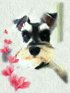 Mini Schnauzer Dogs In Art Giant Schnauzer, Schnauzer Puppy, Miniature Schnauzer, Dog Love, Puppy Love, Cute Puppies, Cute Dogs, Animals And Pets, Cute Animals