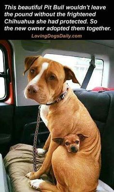 This is amazingly sweet! And so is whoever adopted them!!!